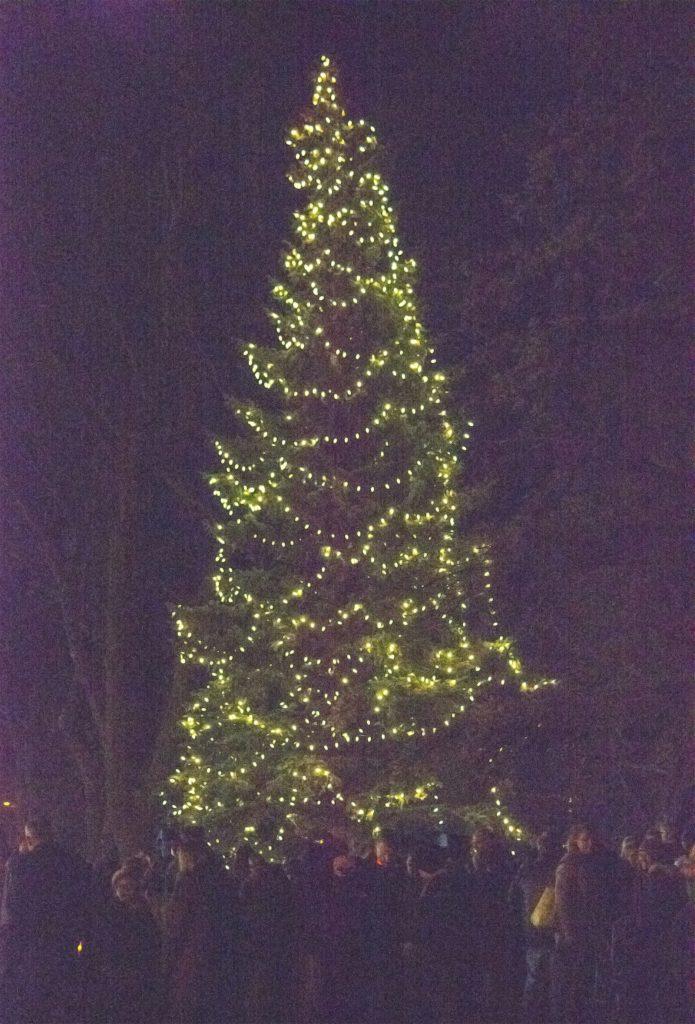 1110.xmas_.tree_.2-copy-695x1024